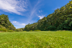 芝生と雑木林の写真素材 [FYI02936243]