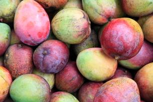 収穫されたマンゴーの写真素材 [FYI02936259]