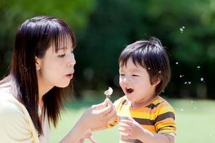 公園でタンポポを持って遊ぶ母と息子の写真素材 [FYI02936290]