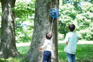 虫取りをする子供の写真素材 [FYI02936399]