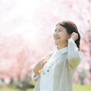 桜を眺めるシニア女性の写真素材 [FYI02936516]