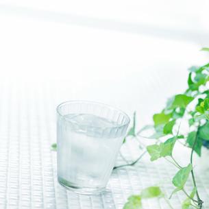 タイルの上の植物とグラスに入った水の写真素材 [FYI02936559]