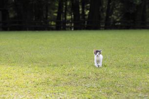 公園の芝生にしょんぼりとたたずむ子猫の写真素材 [FYI02936645]
