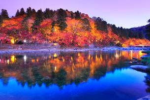 香嵐渓 紅葉に待月橋ライトアップ夕景の写真素材 [FYI02936712]