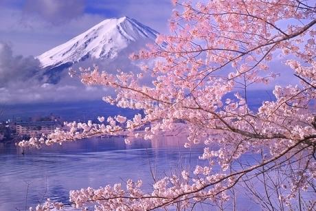 桜咲く河口湖から望む富士山の写真素材 [FYI02936799]