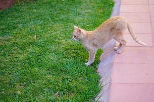 ワルザザードの猫の写真素材 [FYI02936831]