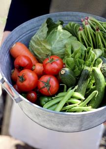 野菜を持った女性の写真素材 [FYI02937221]