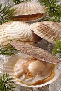 帆立貝の写真素材 [FYI02937744]