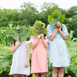 葉っぱで作ったお面を持つ子供たちの写真素材 [FYI02937938]
