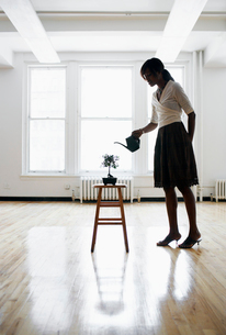 Woman watering bonsai tree in empty roomの写真素材 [FYI02938459]