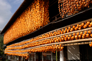 干し柿(百目柿)の写真素材 [FYI02938563]