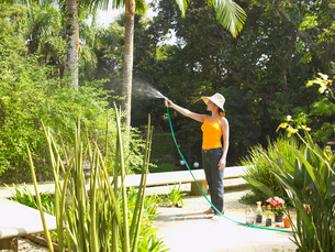 Young woman watering treesの写真素材 [FYI02938615]