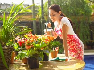 Young woman watering Begoniasの写真素材 [FYI02938999]