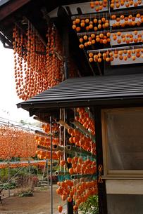 干し柿(百目柿)の写真素材 [FYI02939247]