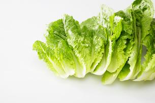 Romaine lettuce leavesの写真素材 [FYI02939311]