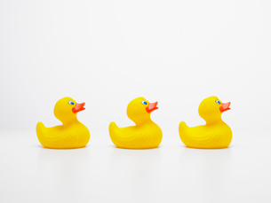 Three rubber ducks in rowの写真素材 [FYI02939326]