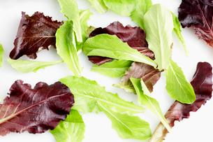 Mesculan mix saladの写真素材 [FYI02939366]
