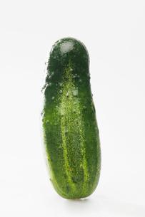 Single pickleの写真素材 [FYI02939384]