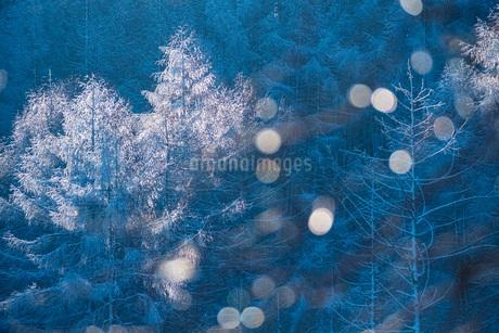 朝の光を浴びる霧氷の樹木の写真素材 [FYI02939697]