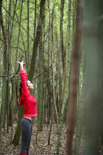 Young woman stretching in forestの写真素材 [FYI02940085]