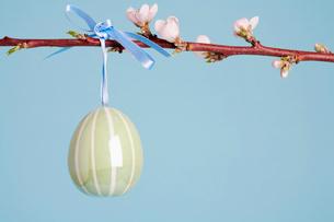 Ceramic Easter egg on Cherry branchの写真素材 [FYI02940842]