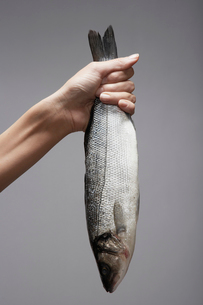 Womans hand holding raw troutの写真素材 [FYI02941039]