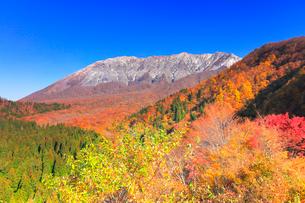快晴の空に紅葉と冠雪の大山の写真素材 [FYI02941243]