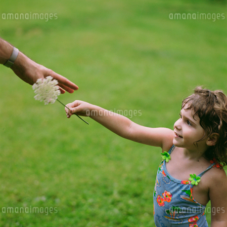 Young girl giving flower to fatherの写真素材 [FYI02941362]