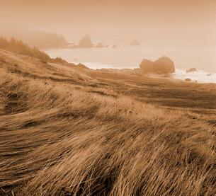 Grass hillside on rocky coastlineの写真素材 [FYI02941363]