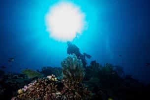 Sunburst above a diver amongst the reefs in Fiji.の写真素材 [FYI02942347]