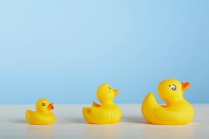 Three Rubber Ducksの写真素材 [FYI02943195]
