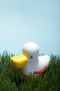 Plastic Toy Duckの写真素材 [FYI02944527]