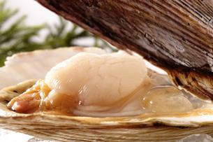 帆立貝の写真素材 [FYI02944995]