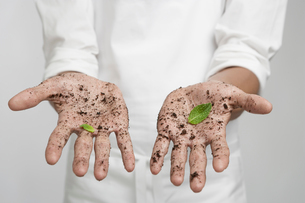 Mint leaves on dirty hands (close-up)の写真素材 [FYI02945032]