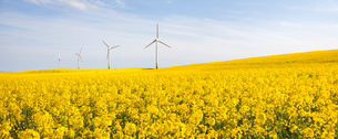 Sweden, Skane, Skurup, Filed of oilseed rape and wind turbinesの写真素材 [FYI02945303]
