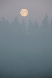 Moon over a forest with mist in Vasterbotten, Swedenの写真素材 [FYI02945447]