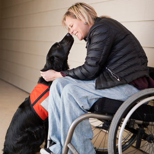 A mature woman wheelchair user with her service dog, a black Labrador, leaning in towards each otherの写真素材 [FYI02945746]
