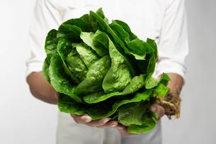 Chef holding romaine lettuceの写真素材 [FYI02945875]