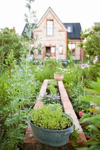 Sweden, Skane, Hoganas, Plants in backyardの写真素材 [FYI02946132]
