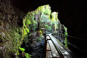 ハワイ島 キラウエア火山 サーストン・ラバ・チューブの写真素材 [FYI02946193]