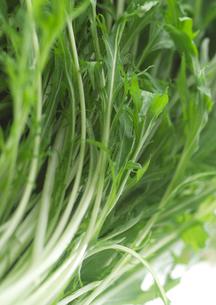 水菜の写真素材 [FYI02946599]