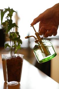 植物に水をやる女性の手元の写真素材 [FYI02947263]