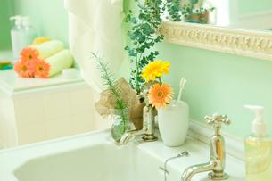 ユーカリとシッシングハーストローズマリーを飾った洗面所の写真素材 [FYI02949962]