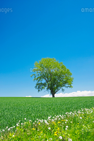 哲学の木と丘と雲の写真素材 [FYI02950497]