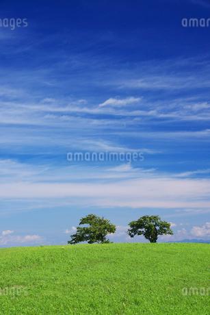 ナイタイ高原牧場の写真素材 [FYI02950554]