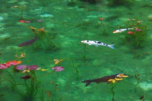 モネが描いた絵のような池の写真素材 [FYI02951150]