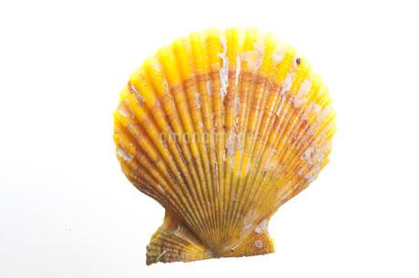 長太郎貝の写真素材 [FYI02952382]