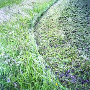 草刈りの跡の写真素材 [FYI02952410]