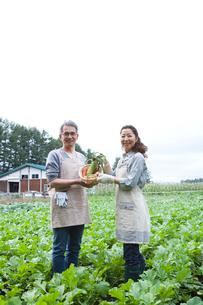 畑で野菜を持ったシニア夫婦の写真素材 [FYI02952783]