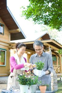 植物の手入れをするシニア夫婦の写真素材 [FYI02953689]